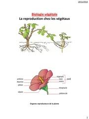 la reproduction chez les vegetaux