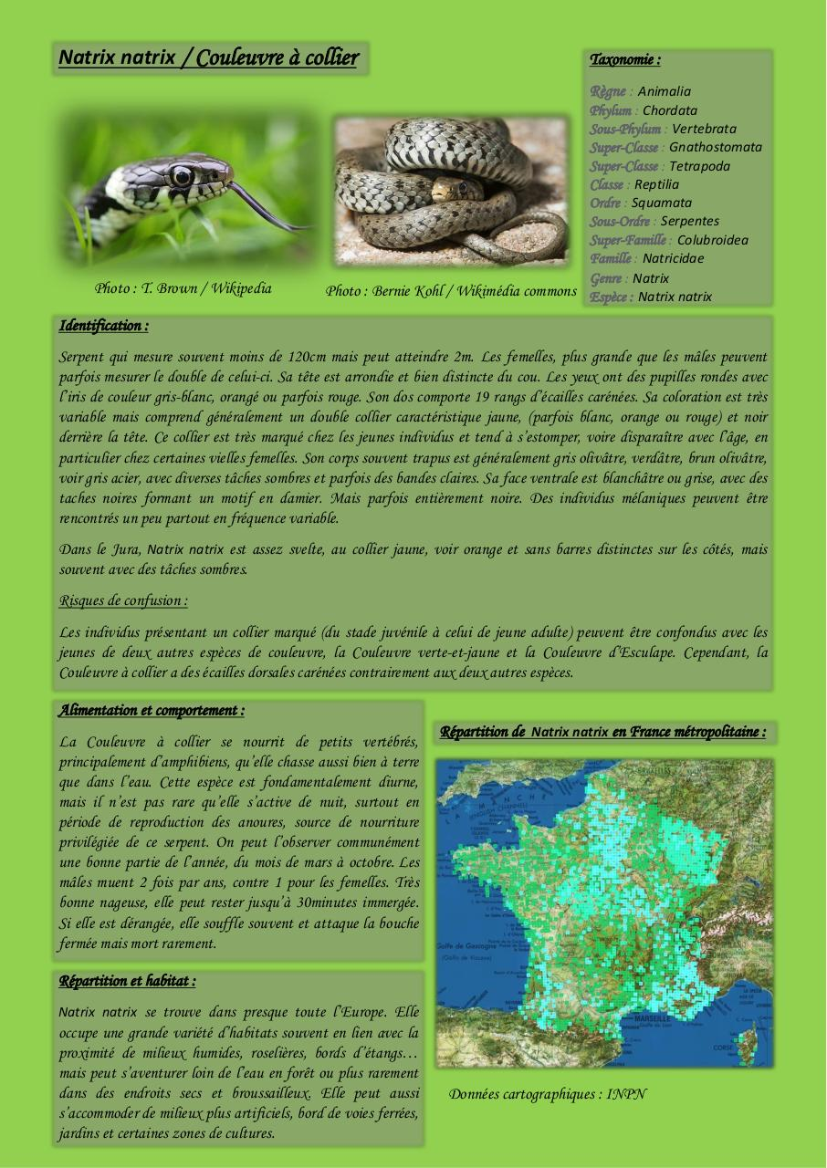 Aperçu du document Natrix natrix - Couleuvre à collier.pdf - page 1/2