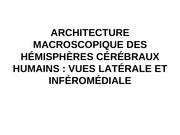 td cerveau morphologie pdf
