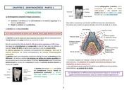 ch2 dentinogenese partie i