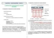 ch2 dentinogenese partie ii