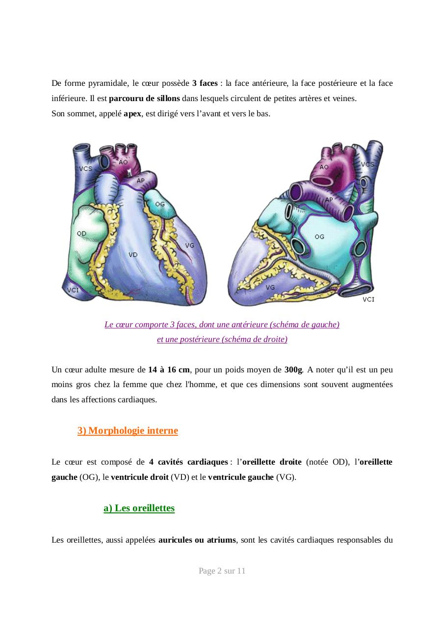 systeme-cardiovasculaire-anatomie.pdf - page 2/11