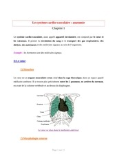 systeme cardiovasculaire anatomie