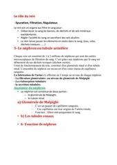 Fichier PDF suite le systeme urinaire