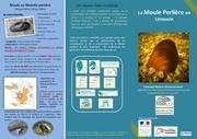 plaquette moule perliere nouvelle