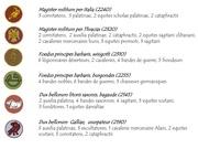 Fichier PDF ordre de bataille invasions barbares