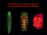 cours complet centralisation et cerebralisation