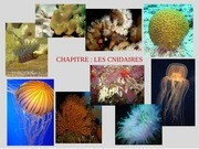 cours complet cnidaires