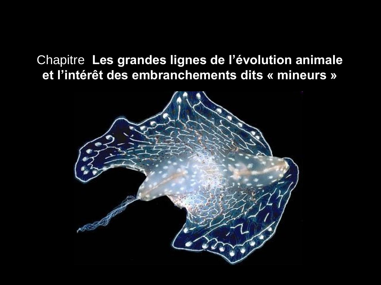 Cours complet Evolution animale et embranchements mineurs.pdf - page 1/111