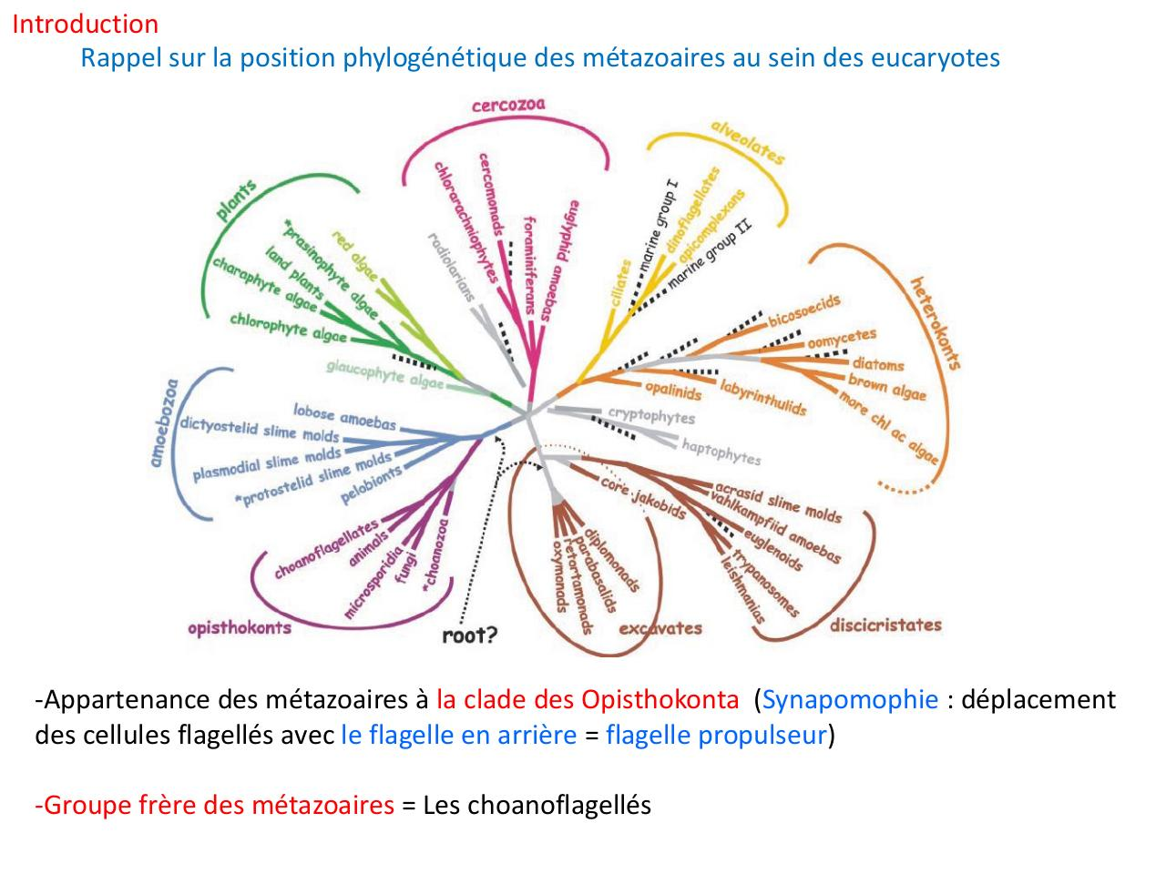 Cours complet Evolution animale et embranchements mineurs.pdf - page 2/111