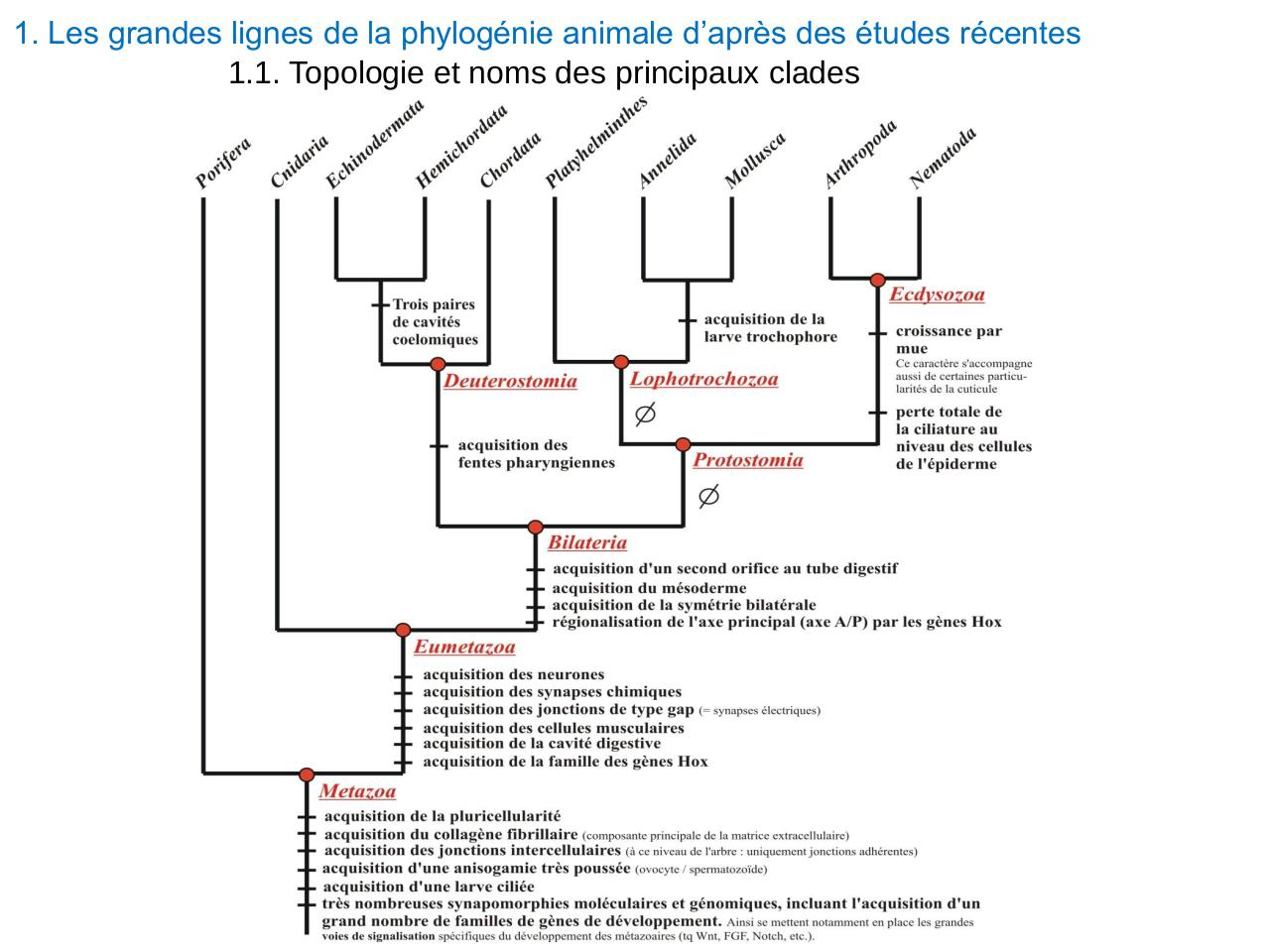 Cours complet Evolution animale et embranchements mineurs.pdf - page 3/111