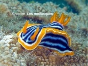 cours complet mollusques