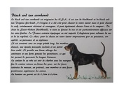 72 black and tan coonhound texte