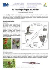Fichier PDF 2013 document craw rouille grillagee poirier
