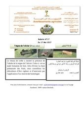 bulletin 17 teigne de l olivier 1