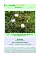 flore carthamus mitissimus carnets vendoire d raymond 2017