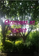 chroniques en carton 7