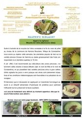 bulletin n 12 17 mouche de l olive fin