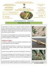 06 17 note technique tuberculose de l olivier