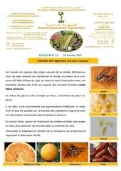 13 17 ceratite des agrumes