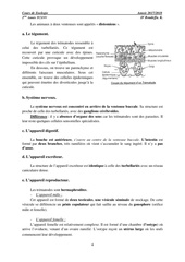 les Plathelminthes.pdf - page 4/7
