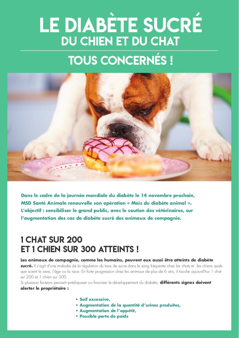 diabetes sucre chien et chat
