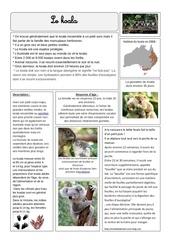 Fichier PDF koala