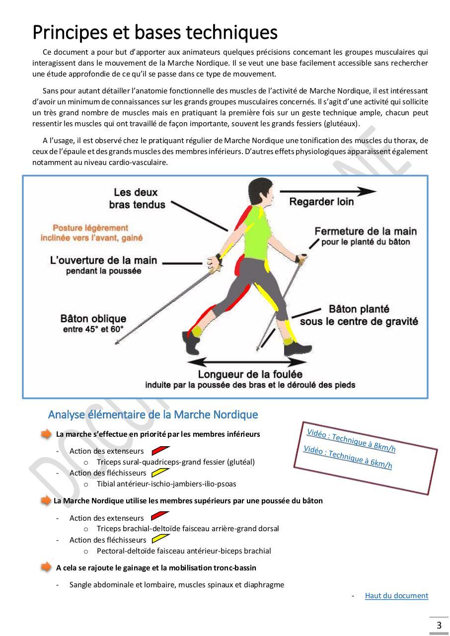 anatomie des muscles du dos pdf