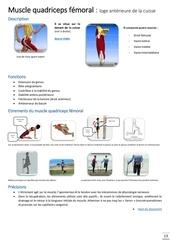 muscles quadriceps femoral