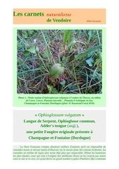 ophioglossum vulgatum champagne fontaine d raymond 2018