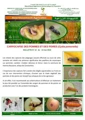 13 18 carpocapse des pommes et des poires 1