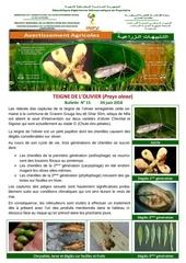 15 18 teigne olivier 1