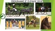 programme delevage du poney new forest par la voie femelle final