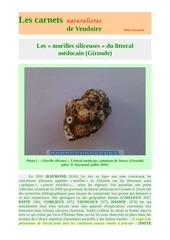 morilles siliceuses littoral medoc carnets d raymond 2018