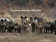 Fichier PDF peste porcine 09 18