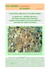 ascidies fossiles morilles siliceuses d raymond 2018