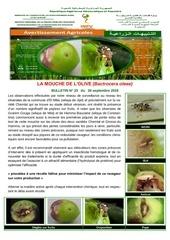 Fichier PDF 23 18mouche de lolive bactrocera oleae
