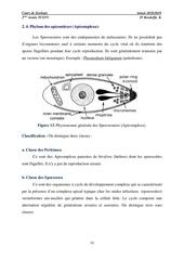 protozoaires 02
