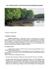 tpe mangrove