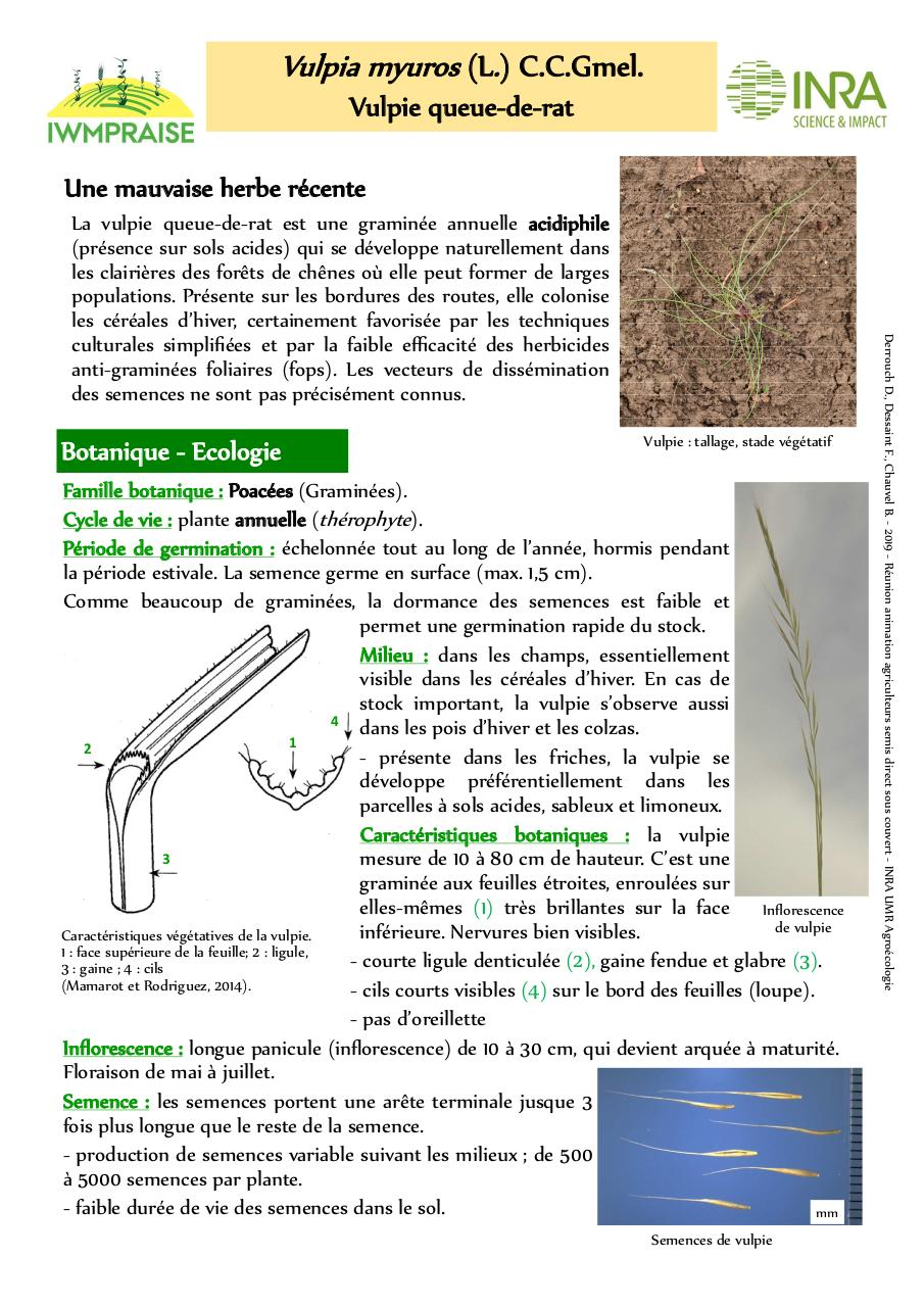 Aperçu du document Vulpie.pdf - page 1/2