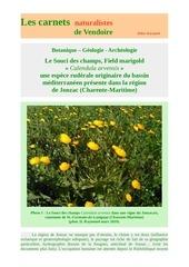 souci des champs calendula arvensis carnets d raymond 2019