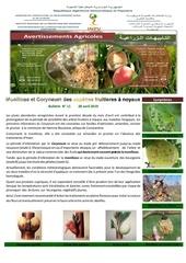 11 19 moniliose et coryneum des espces fruitires  noyaux
