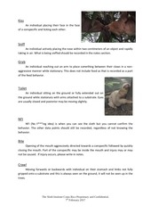 TSI Sloth Observation Guide.pdf - page 6/14