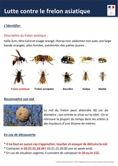 affiche lutte contre le frelon asiatique