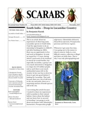 scarabs 85
