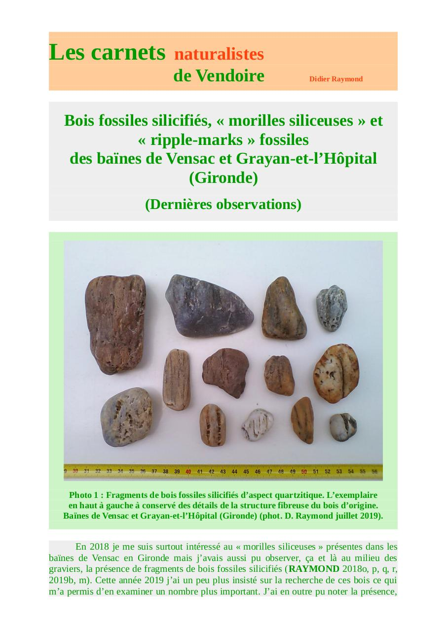 ripple-marks-bois-fossiles-littoral-gironde-d-raymond-2019.pdf - page 1/28