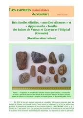 ripple marks bois fossiles littoral gironde d raymond 2019