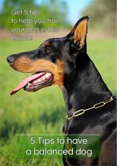 5 tips to a balanced dog