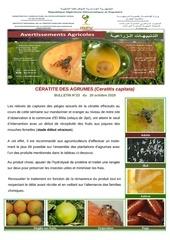 23 19 ceratite des agrumes ceratitis capitata