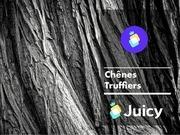 fiche catalogue   chene truffiers